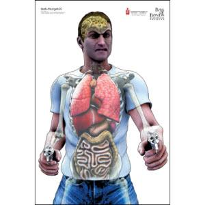 Anatomic2