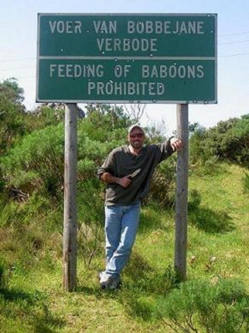 Baboons-1